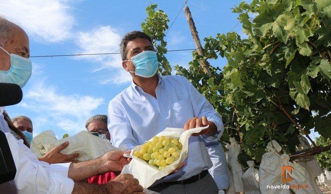 El PP de la Provincia de Alicante denuncia el aumento de los impuestos a la uva de mesa en un año crítico para el sector