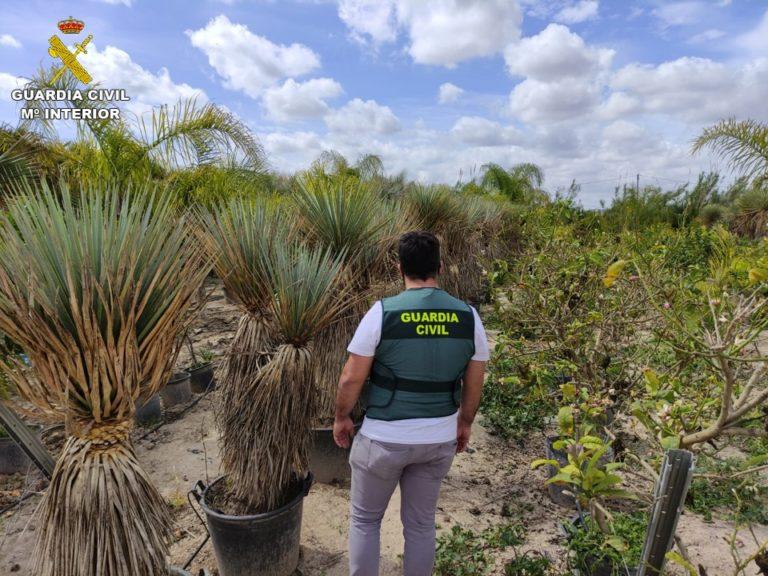 La Guardia Civil detiene al presunto autor del robo de 70 plantas de Yuca Rostrata
