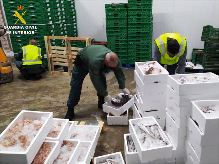 La Guardia Civil interviene más de 400 kilogramos de pescado fresco que se estaba transportando de forma irregular