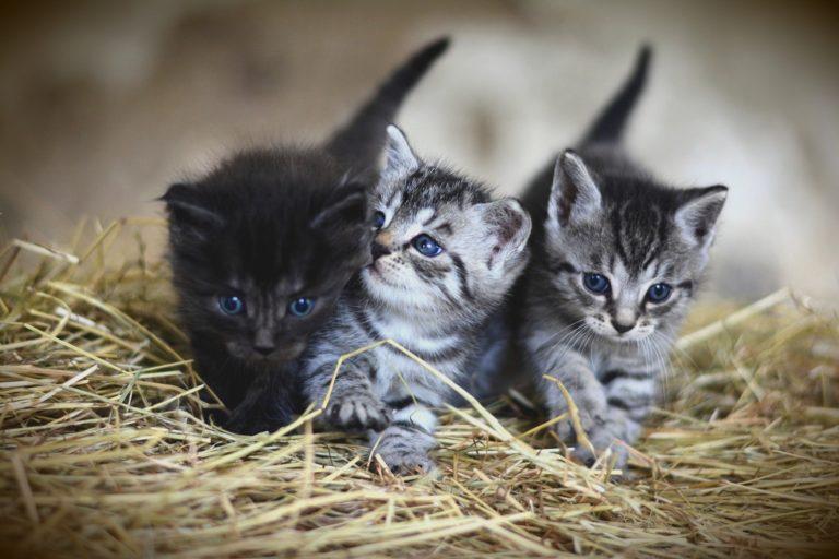 La Diputación concede a Novelda 21.294'98 euros en nuevas subvenciones a la movilidad sostenible y a la esterilización de gatos sin dueño