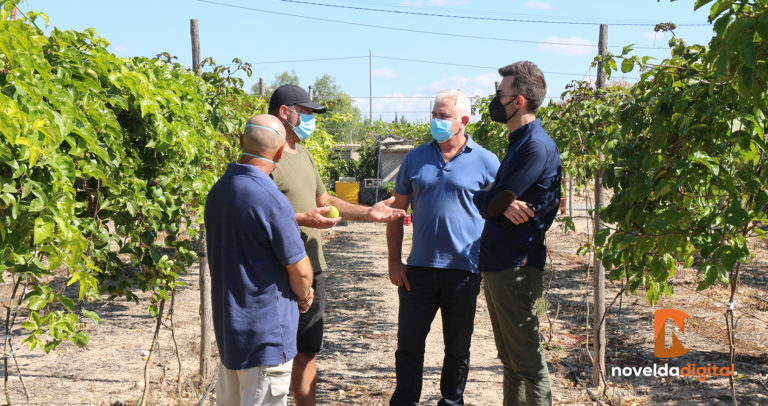 El alcalde y el concejal de Agricultura visitan la plantación exótica de Mediterráneo Tropical Novelda